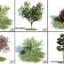 ملفات بروكسي لاشجار خاص بفيراي السكاتشب