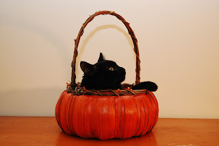 Black Cat Sitting in Basket Painted Orange