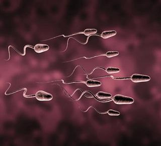Celana Ketat Sebabkan Sperma Menjadi Tidak Sehat