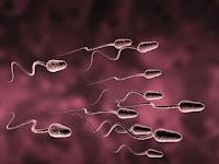 Celana Ketat Sebabkan Sperma Jadi Tidak Sehat