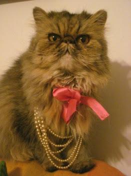 Fara, una gata vintage