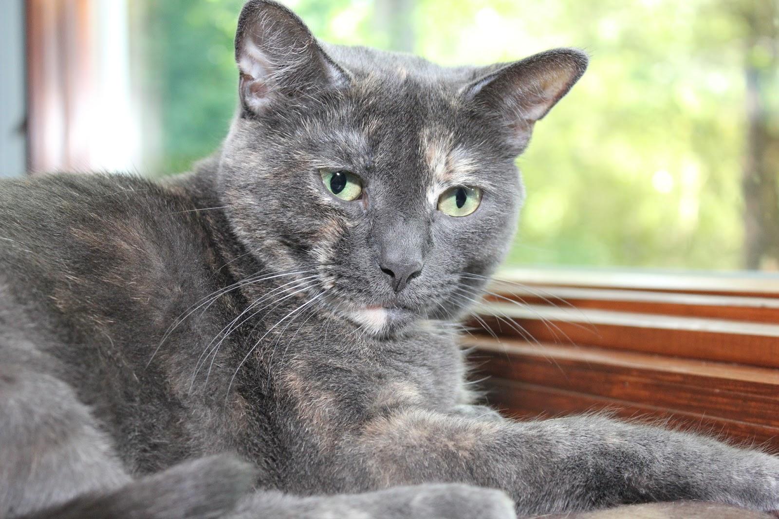 Athena the cat