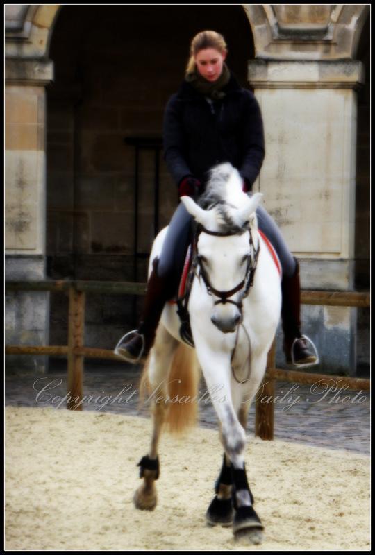 Académie Equestre Versailles horse stables