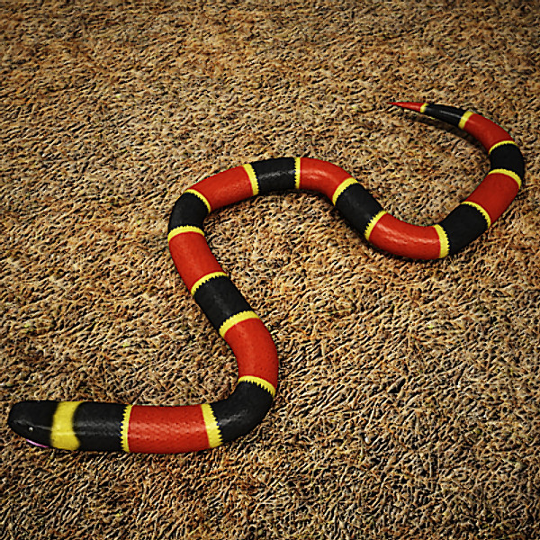 Snakes: Coral Snake