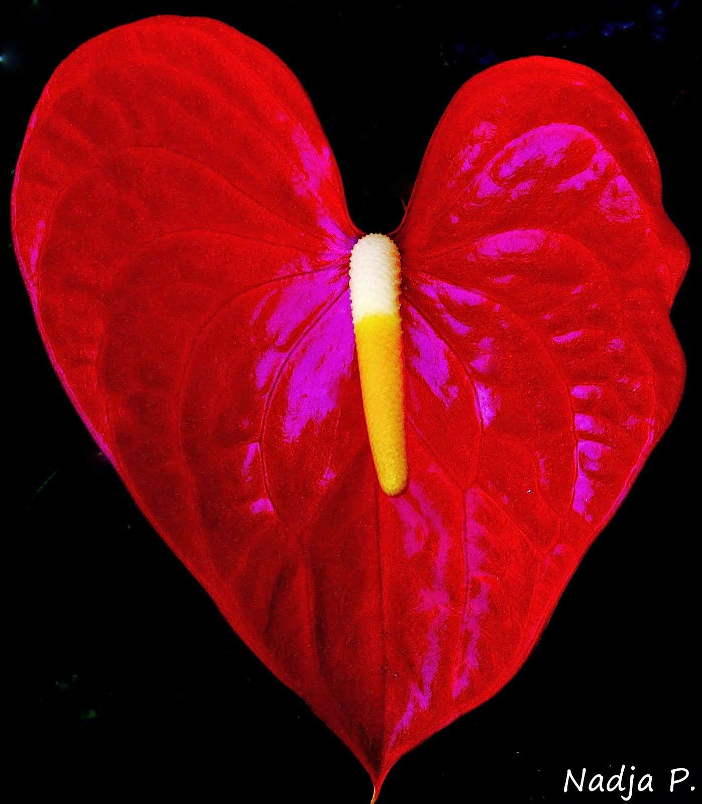 """""""Amar uma pessoa significa..."""