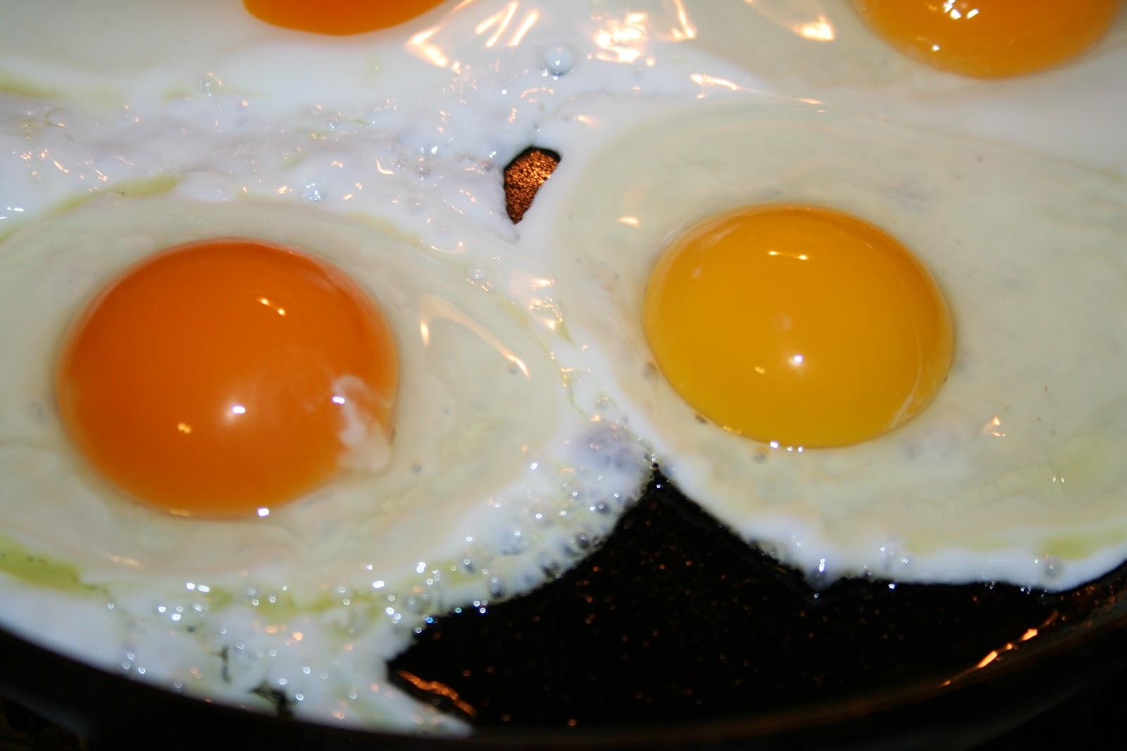 Farm Egg vs Organic Egg