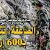 الصاعقة تتربص بـ600 إرهابي ينتمون للقاعدة و داعش بالحدود