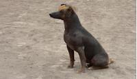 raza perro extraña