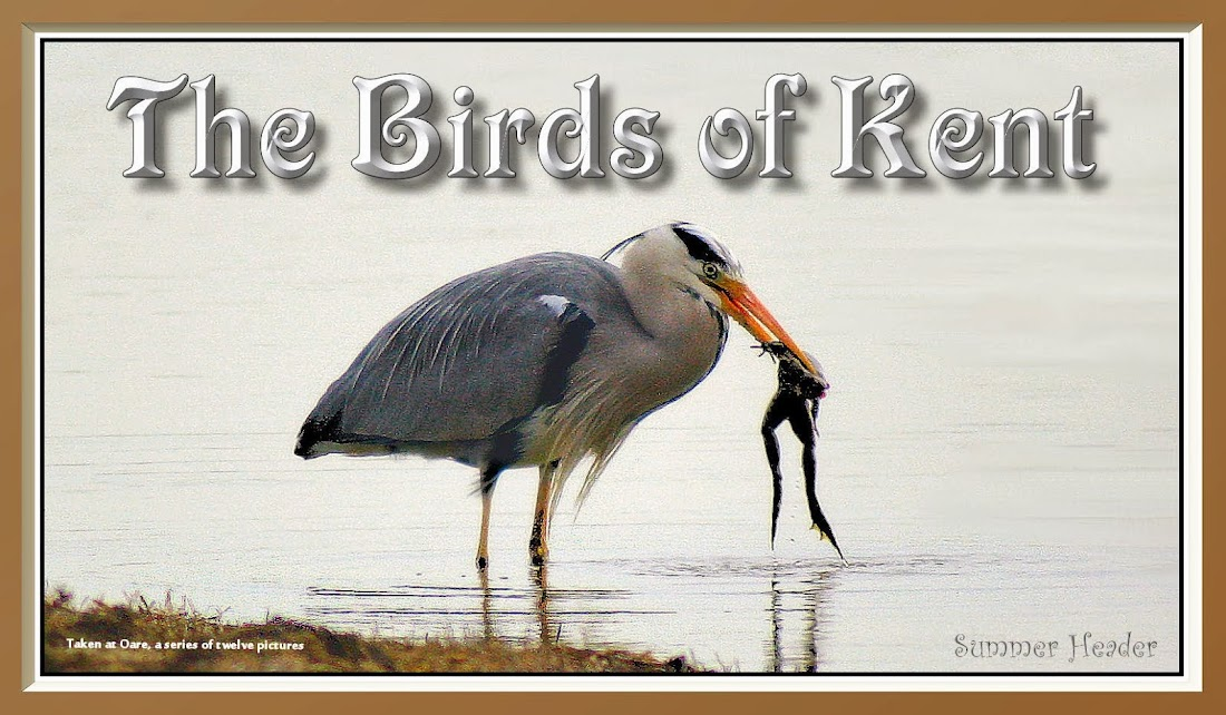 The Birds of Kent
