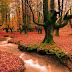 Colorful Autumn Trees photos
