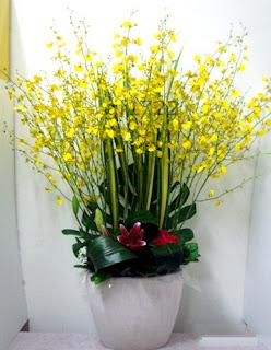 bunga anggrek hotel bandung