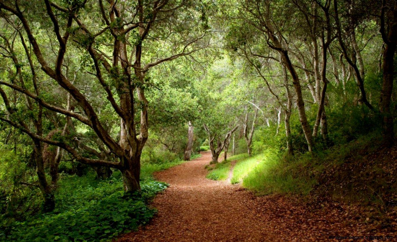 Árboles forestales Sendero hojas de las plantas fondos de pantalla
