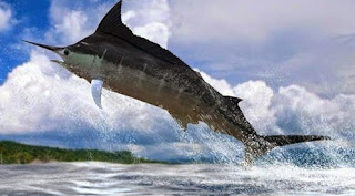 mancing ikan memancing,umpan mancing ikan air tawar,cara memancing laut,umpan ikan laut dalam,umpan ikan laut dangkal,umpan ikan belanak laut,resep umpan mancing ikan air tawar,