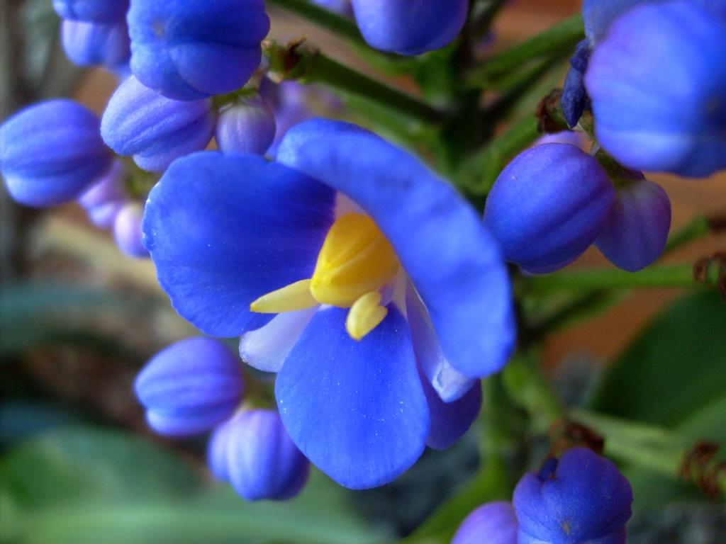 112. flores para jardim azuis:coloração azul arroxeada de sua flor  #082AC3 1024x768 Banheiro Cachorro Grama