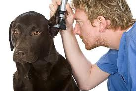 how to clean my dogs ears