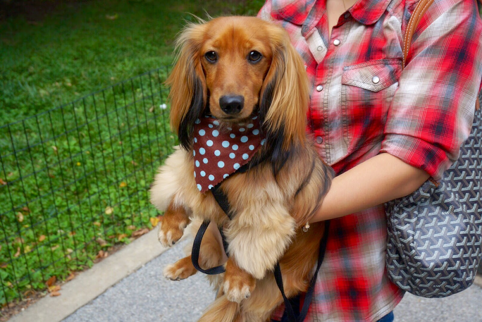 Les bananas how to groom a long hair dachshund unleashed spa i think i paid like 20 30 more than a full grooming session at petco including tip but the result is totally worth it i think leos session at petco solutioingenieria Images