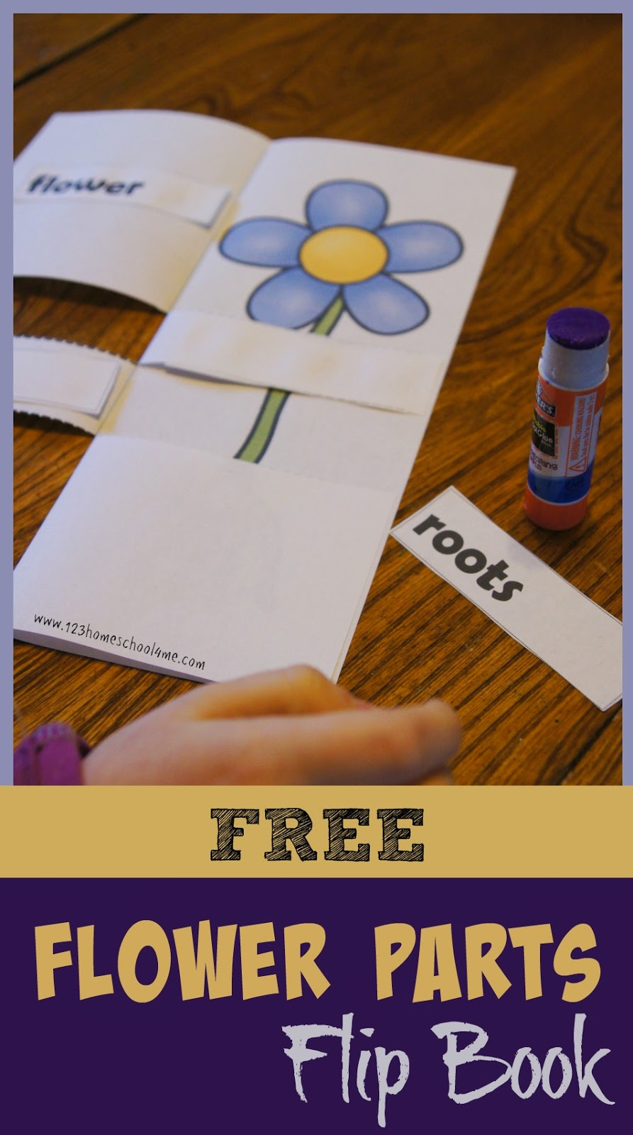 worksheet Parts Of A Flower Worksheet For Preschool parts of a flower printables and crafts flip book is free science printable for kids from preschool kindergarten