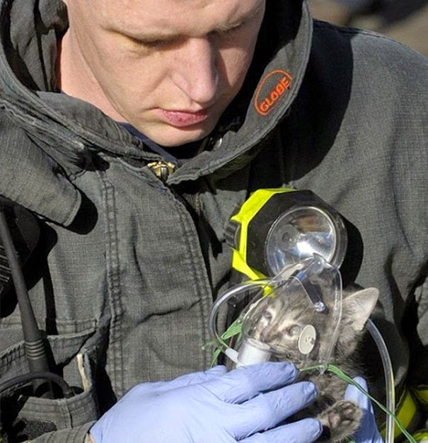 20+ Photos That Will Restore Your Faith In Humanity - Firefighter Administers Oxygen To Cat Rescued From House Fire