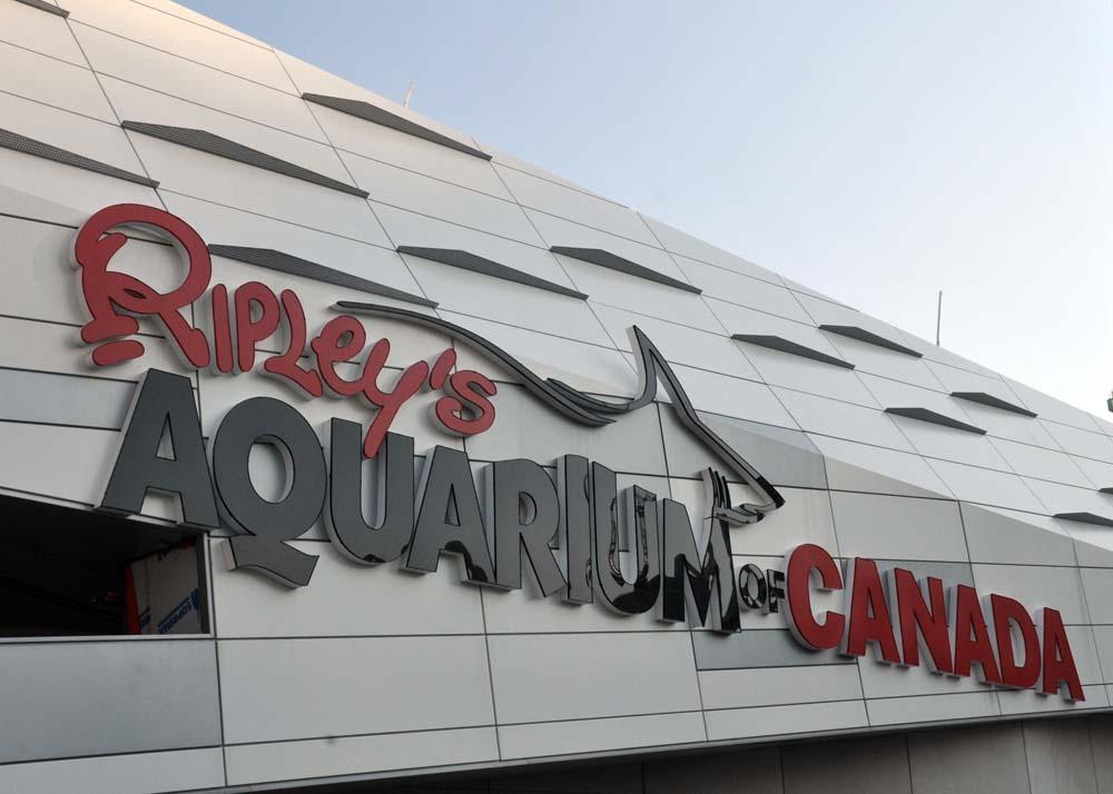Ripley's Aquarium of Canada - Amazing photos you can't ...