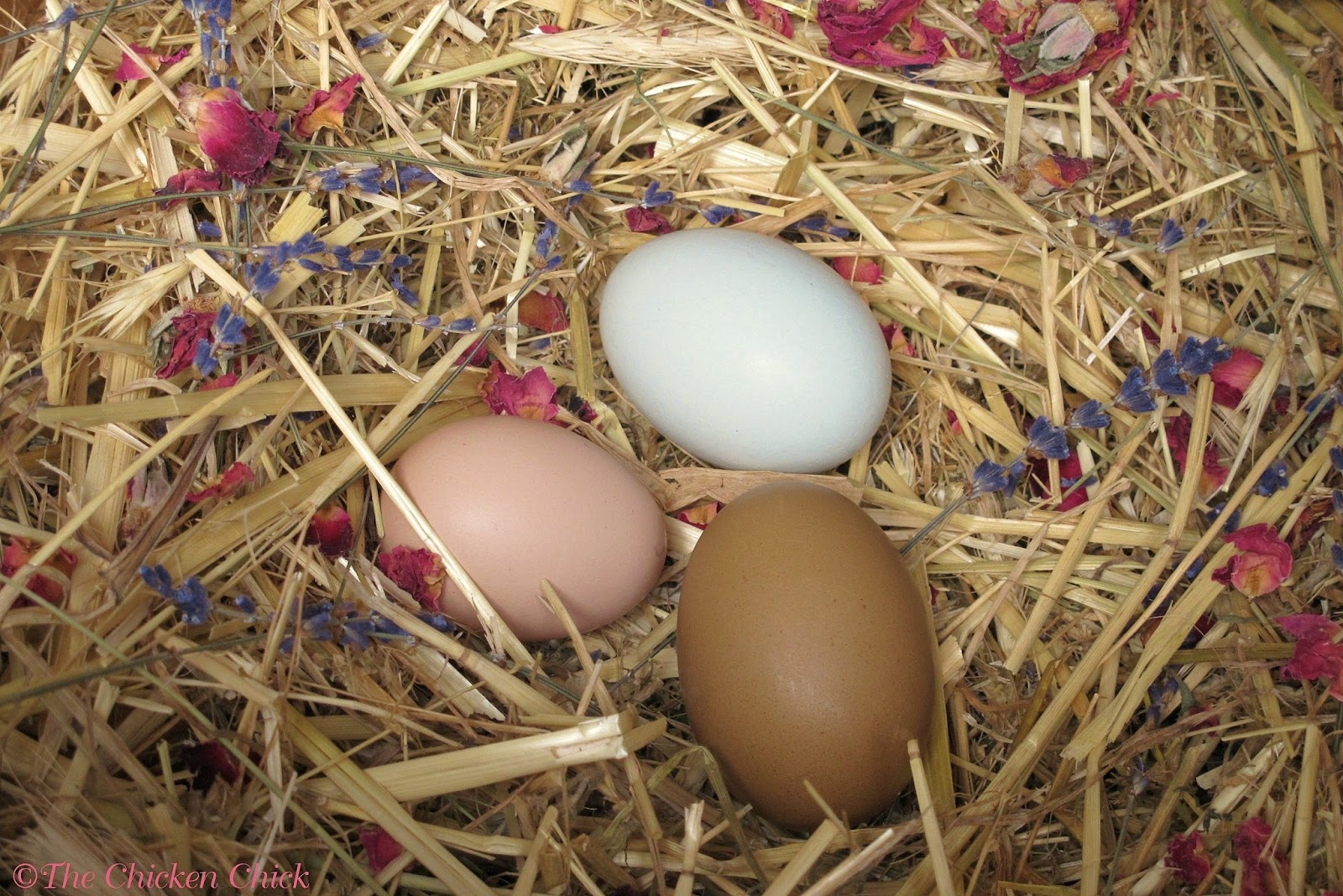 The Chicken Chick®: Egg Float Test- Indicates Approximate Age, NOT ...