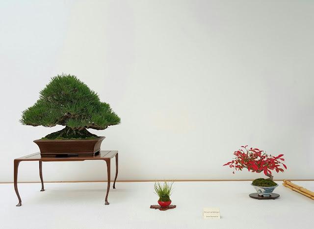 Mesa delicada pero que eleva al arbol serio de manera genial
