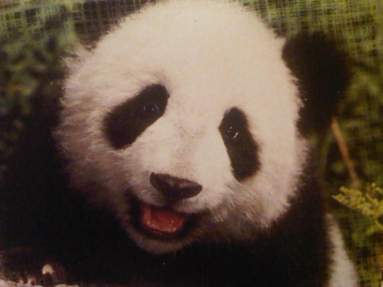 Panda smile. | SMILE..SMILE..SMILE..SMILE | Pinterest
