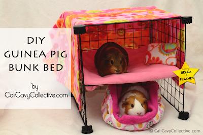guinea pig C&C bunk bed