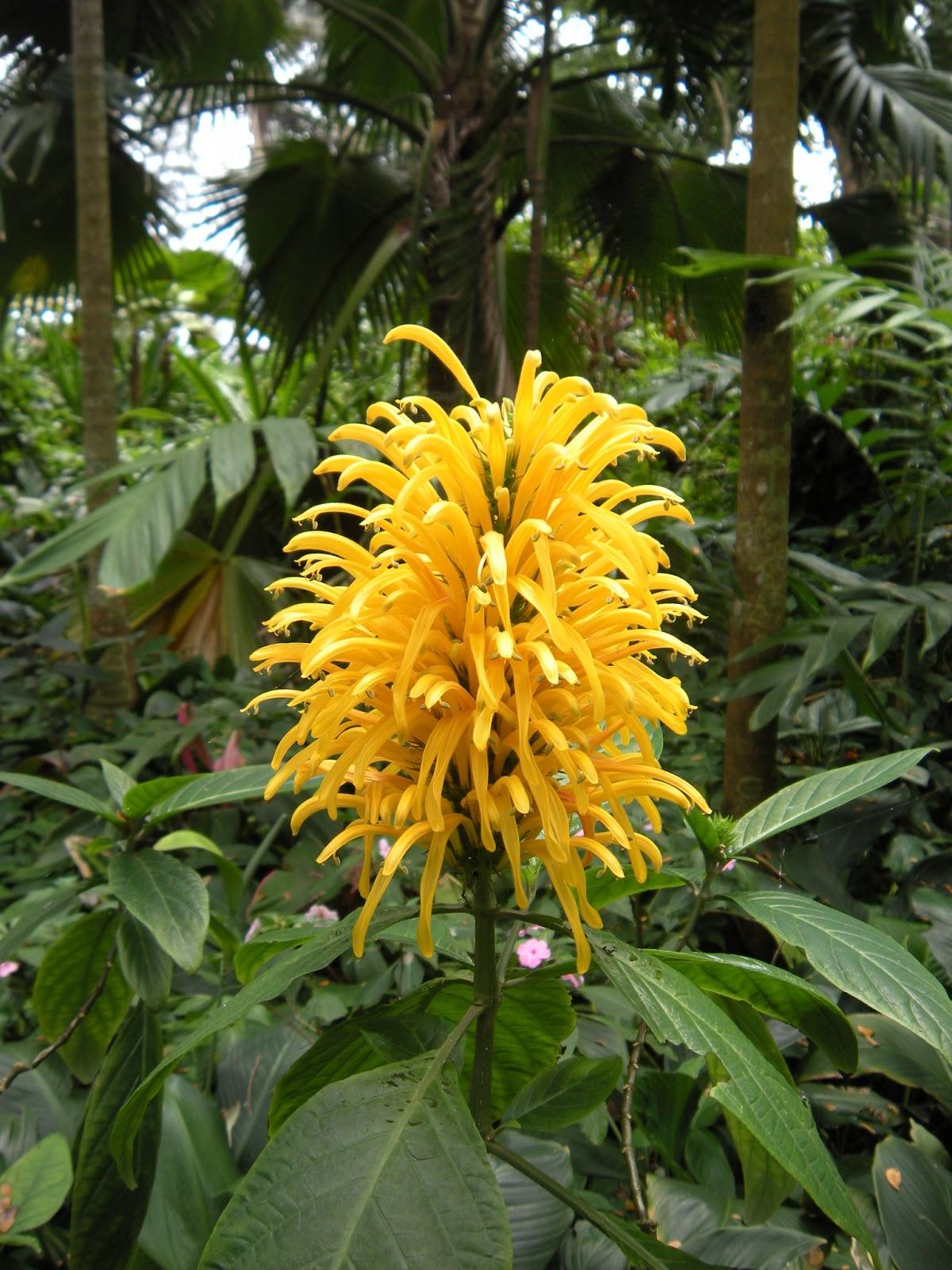 Golden Rose 3 DaNang Vietnam