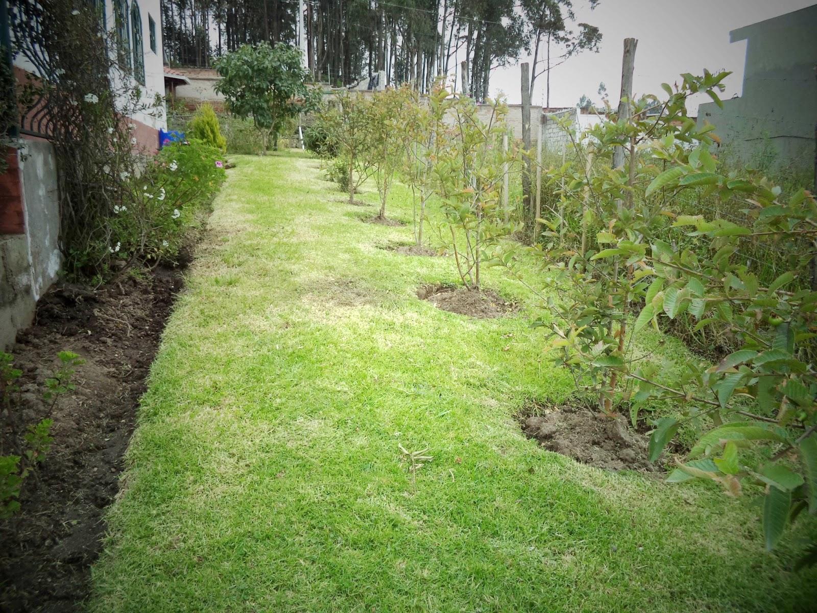 Jardilandia fotos de dise os de jardines for Diseno de jardines fotos