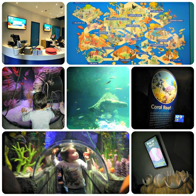 Inside the Sea Life Centre Manchester Trafford Centre