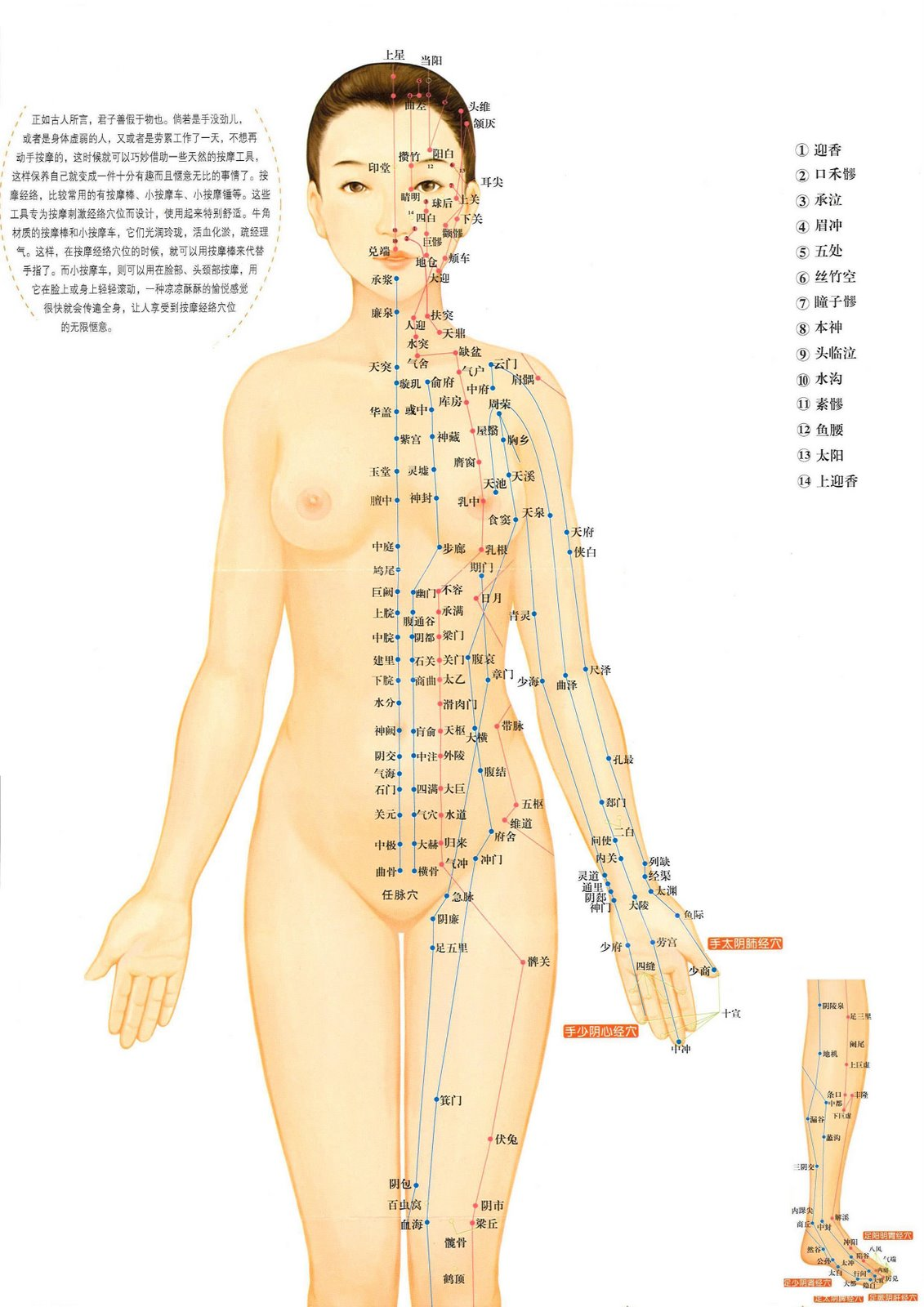 pressure points of the body for pleasure