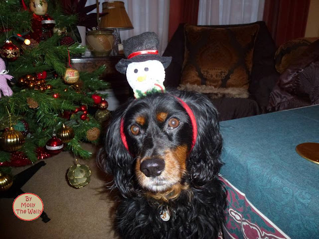 Molly The Wally Has An Easy Christmas 4 !
