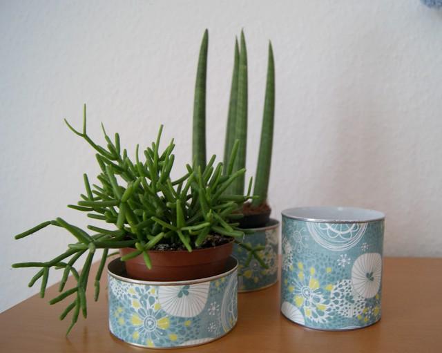 Filz und Garten - Gartenblog: Leben mit Pflanzen