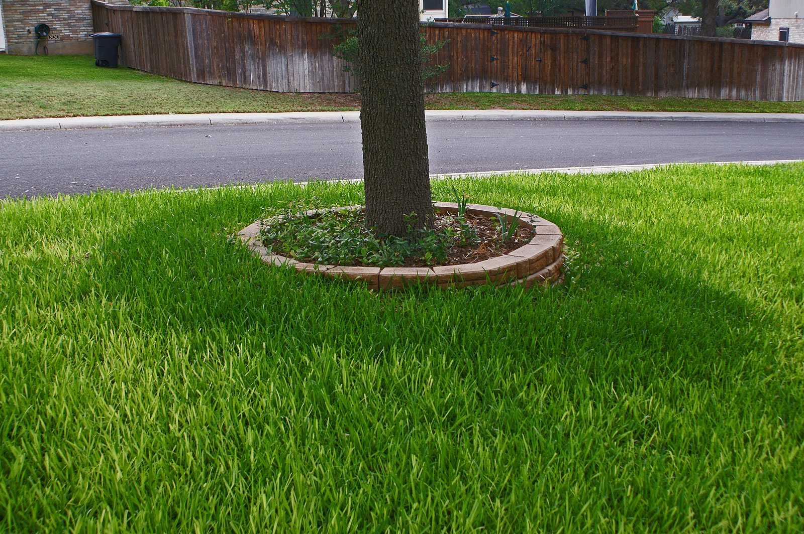 Evens Construction Pvt Ltd 10 Grasses For Your Yard