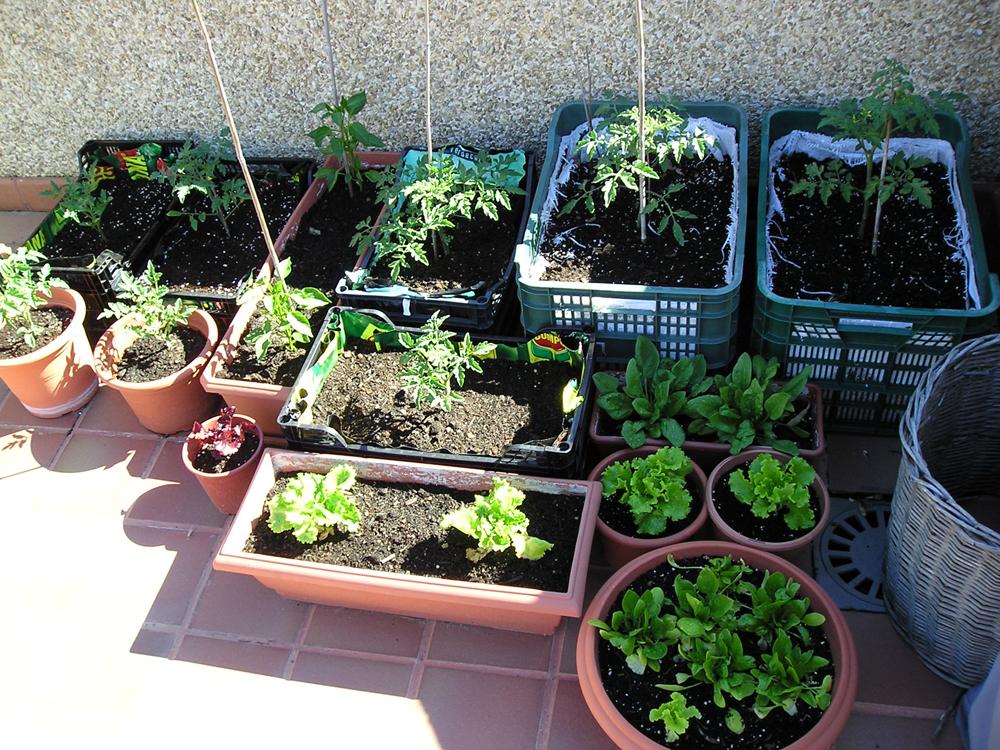 Huertos urbanos bah a de c diz la universidad miguel for Asociacion cultivos huerto urbano