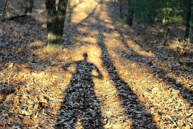 shadow fun on the Camel Bluff trail, Mill Bluff State Park, WI