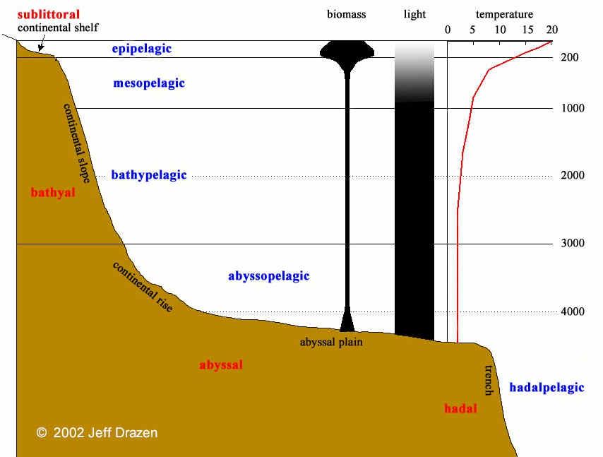 Diagram of ocean depth diagram free engine image for for Ocean floor zones diagram