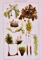 Antique Nature Printable Moss Lichen Forest Book Plate Poster via KnickofTimeInteriors.blogspot.com