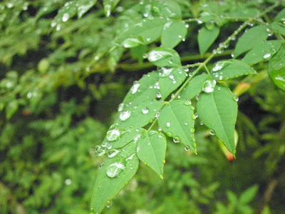 葉っぱと雨つぶ