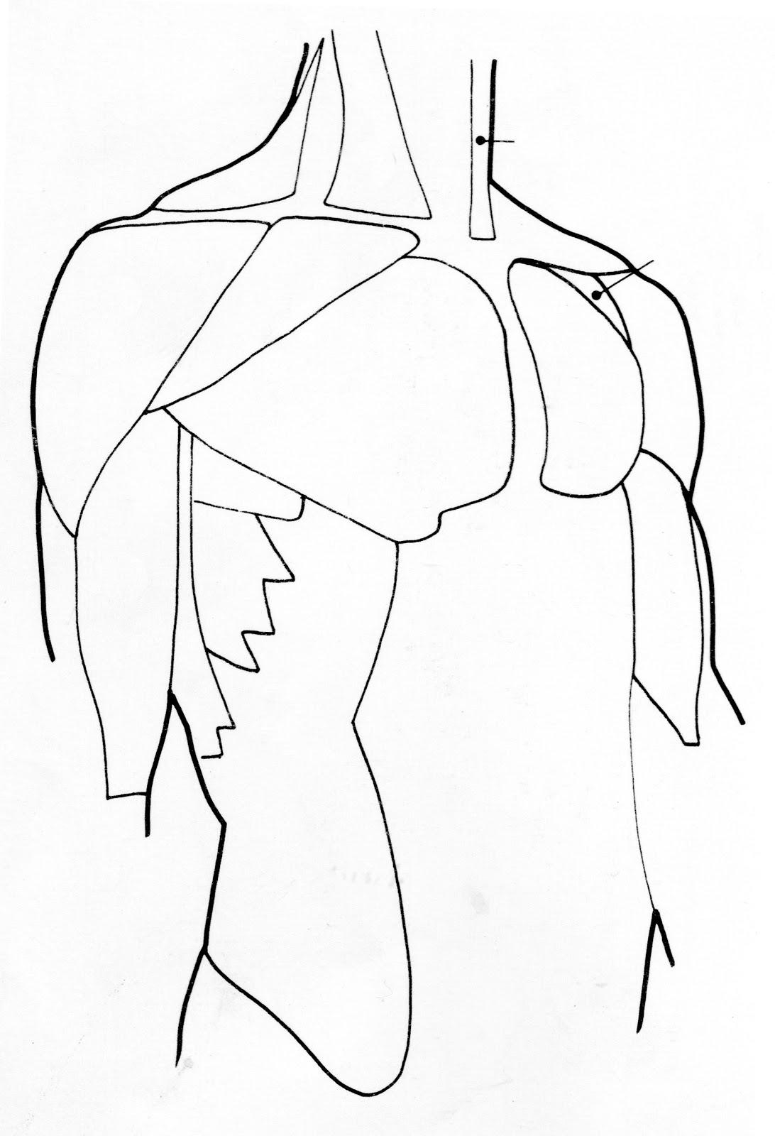 Excepcional Trazar Los Músculos Componente - Anatomía de Las ...