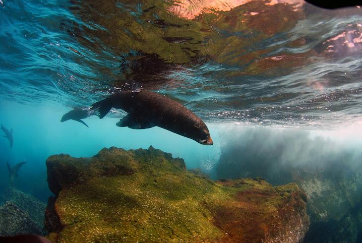 Wolf Island Sea Lions
