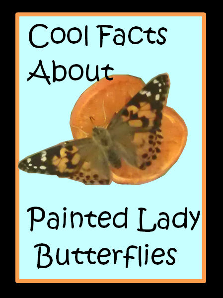 Cool Facts About Painted Lady Butterflies  Preschool Powol Packets