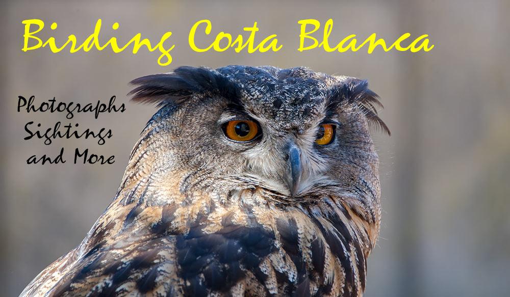 Birding Costa Blanca