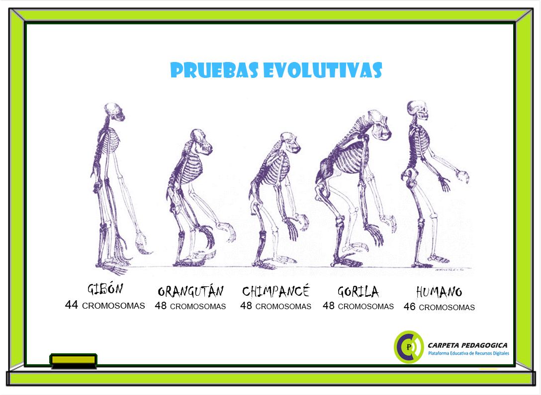 Pruebas Evolutivas | Ciencias Naturales