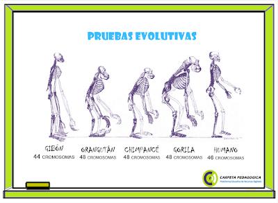 Pruebas Evolutivas