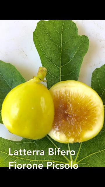 Latterra Bifero Fiorone Picsolo Figs