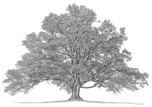 Academic Genalogy