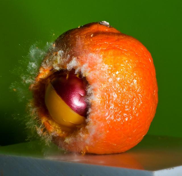 Tangerine Dive