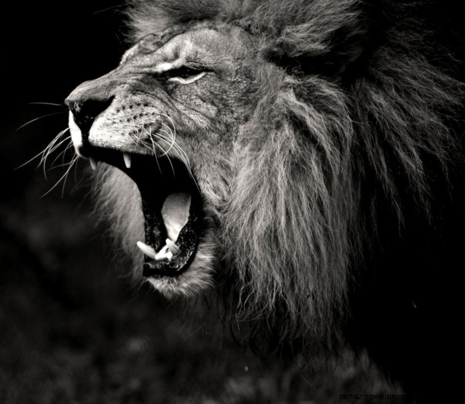 Lion Roar Wallpaper Black And White