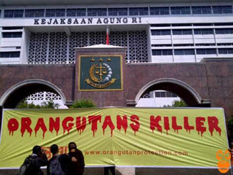 Soal Penanganan Kasus Orangutan, COP Memprotes Jaksa